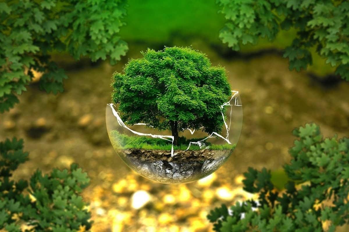 Protecția mediului înconjurător - Ce se poate face pentru un viitor mai bun - Stratos.ro