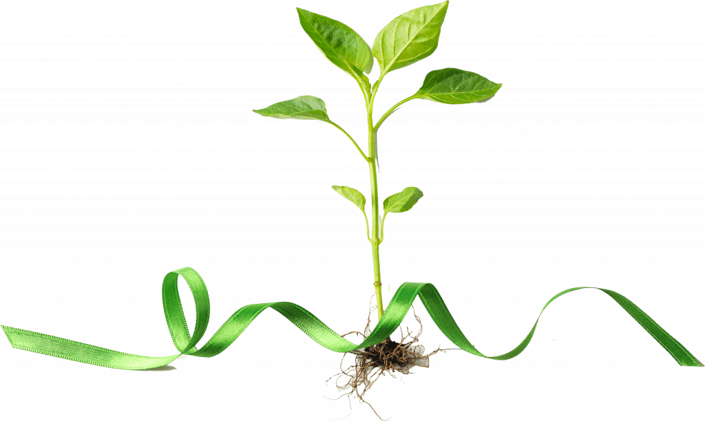Consultanta de Mediu - Ce este CSR? - Stratos.ro