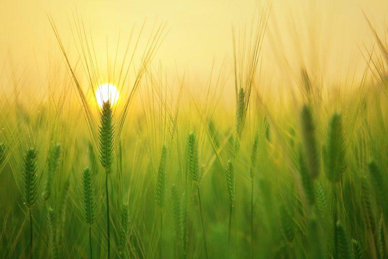 Care sunt obligațiile de mediu pentru o agricultură sustenabilă? - Stratos.ro